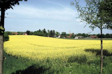 Kastorf, Gewerbegrundstücke Im B-Plan Nr. 18