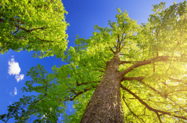 """Tolle Aktion In Krummesse: """"Baum Des Jahres"""""""