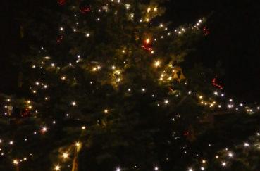 Weihnachtsbaum In Kastorf
